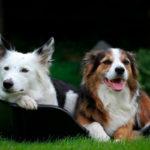 Wonderfold Hundekurven